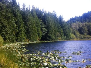 Blinkhorn Lake in Metchosin, BC.  Photograph by Adam Ungstad.