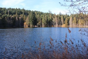 Killarney Lake in Mount Work Park.  Saanich, Victoria BC.