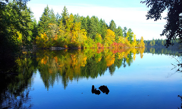 Reflection at Elk / Beaver Lake.  Photograph by @YYJPics.