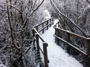 Trail around Swan Lake in the Snow.  Victoria, BC.
