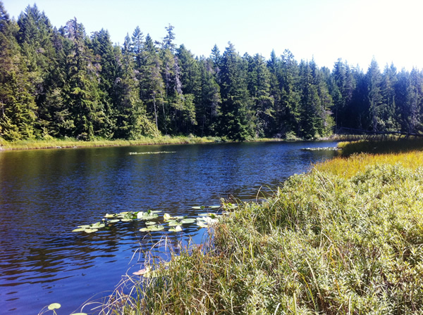 Grass Lake in Sooke, BC.  Photograph by Adam Ungstad.